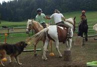 poney-2222