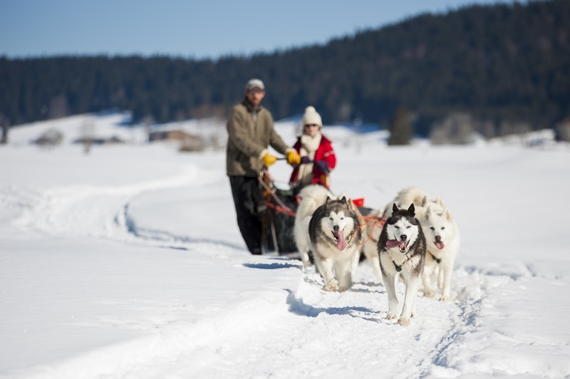 Musher training pistes