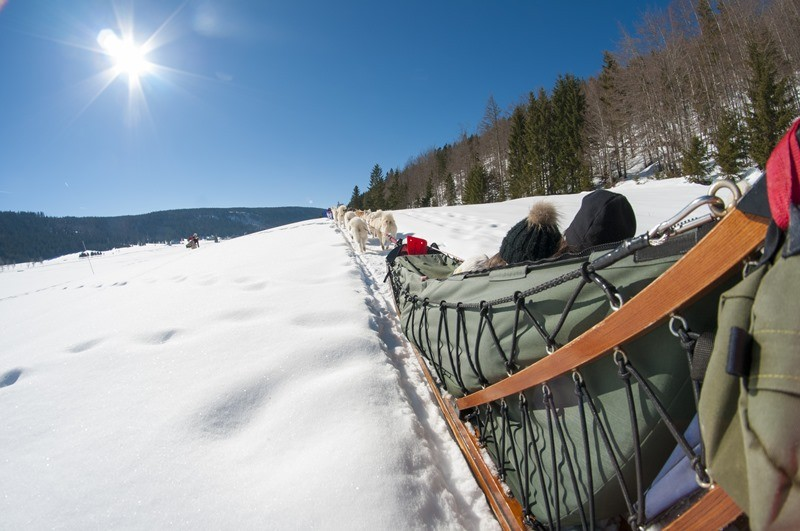 Dog-sledding Equipment