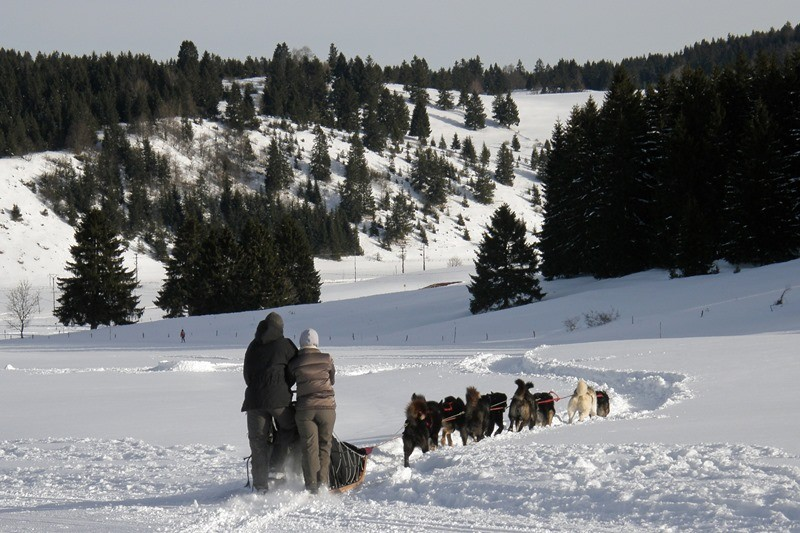 Dog-sledding rides and long-distance trekking
