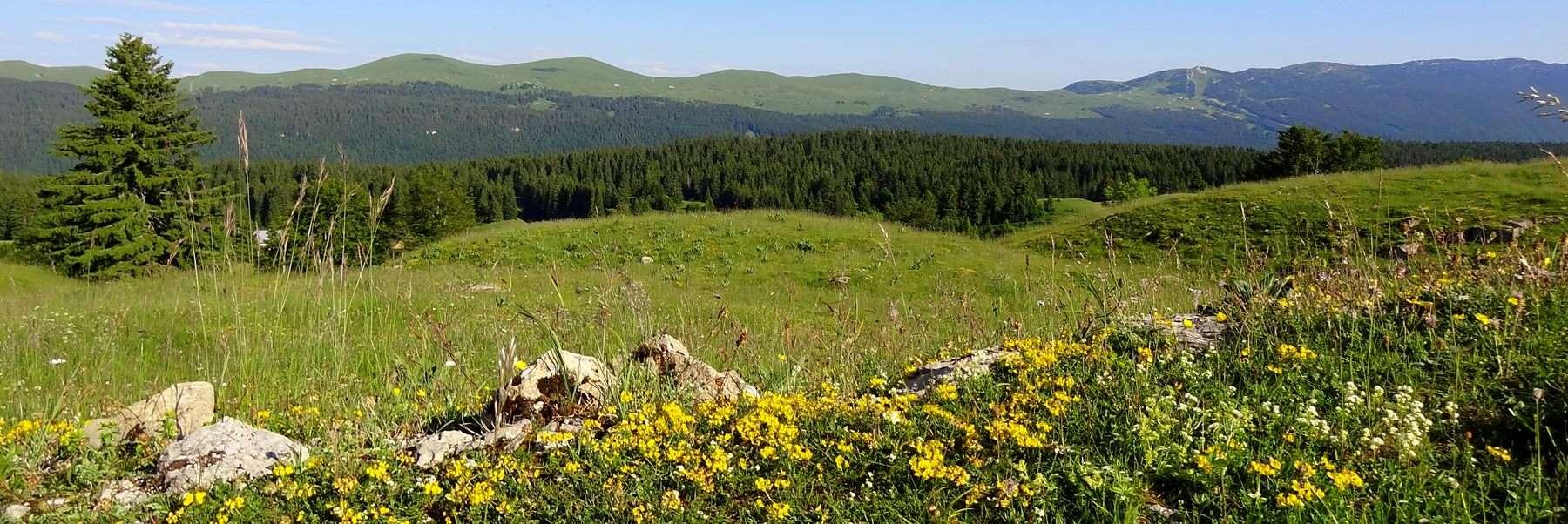 Les Monts Jura depuis Les Molunes