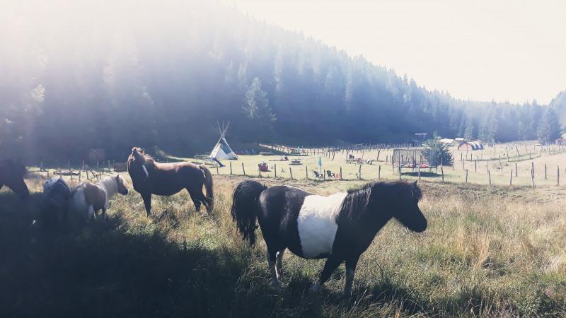 1- Activité nature , poney