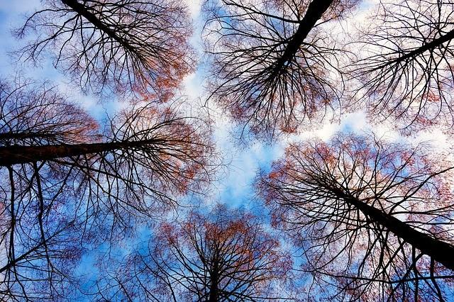 tree-tops-2991743_640
