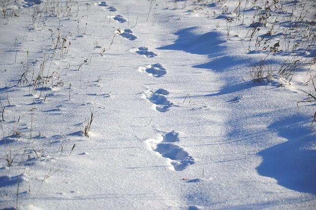 animal-tracks-1858350_640