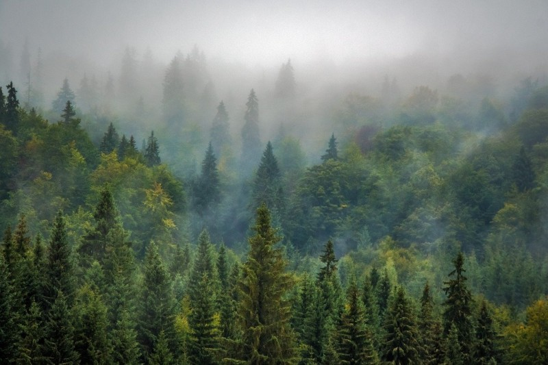 trees-975091_1280
